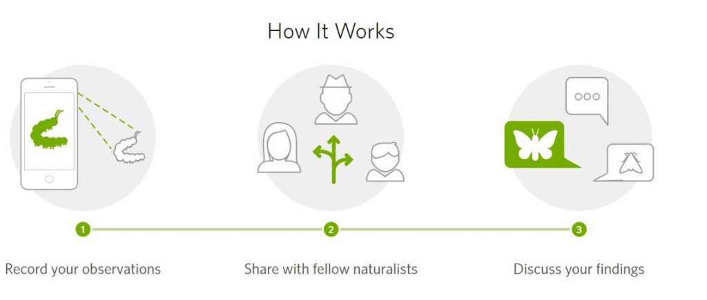 inaturalist-how