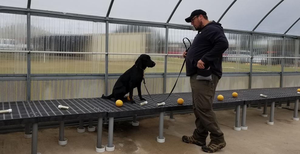 cover-detector-dog-team